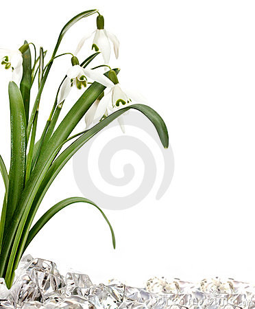 Free Snowdrops Stock Images - 18607654