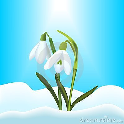 Free Snowdrops Royalty Free Stock Images - 23577109