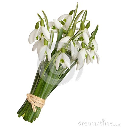 Free Snowdrops Royalty Free Stock Photography - 51180657