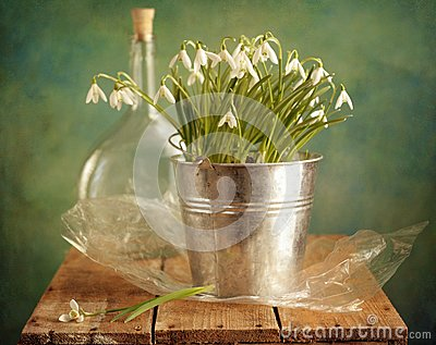 Snowdrops bunch