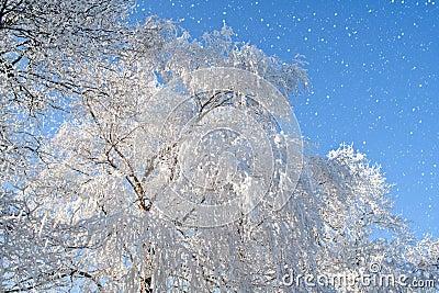 Snowflakes & white tree