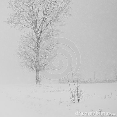 Free Snowing A Lot In The Lane Royalty Free Stock Images - 48404259