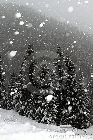 Free Snowing In Winter Stock Photo - 22977070