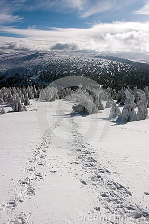 Snowshoe Footprints on Snowy Plain in Sunny Day Editorial Photo