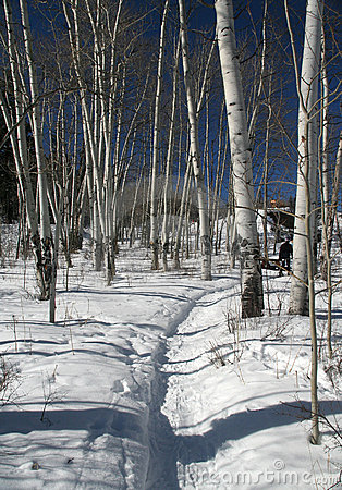 Snowshoe hiker, shadows of aspens,,