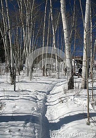 Snowshoe hiker, shadows of aspens,,