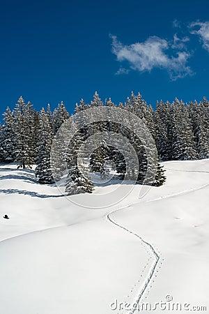 Snowshoe traces