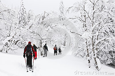 Snowshoeing in a forest