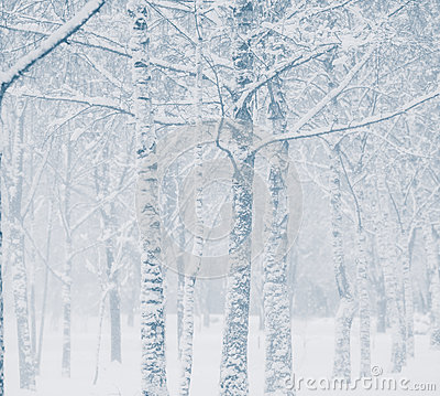 Free Snowstorm Stock Image - 47589131