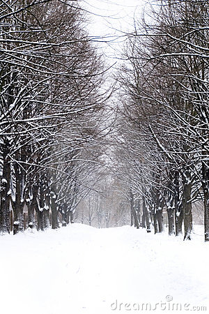 Snowy alley in the park