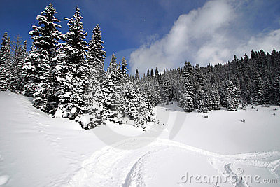 Snowy Alpine Forest