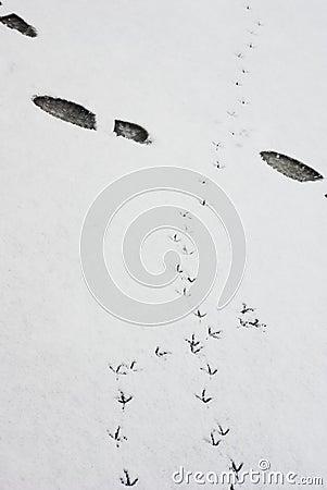 In snowy area footprint
