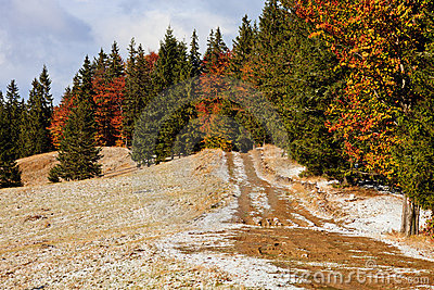 Snowy autumn road with pine trees