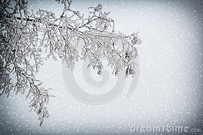 Snowy branch with vignette and snowfall