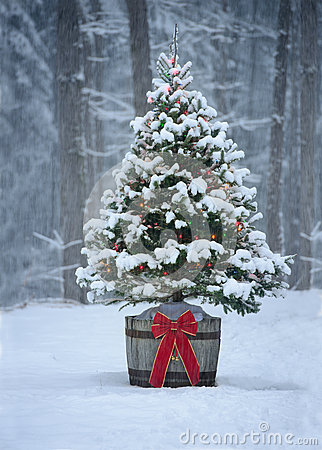 Snow covered natural spruce christmas tree with illuminated colorful