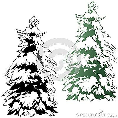 Snowy Coniferous Tree