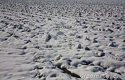Snowy cotton