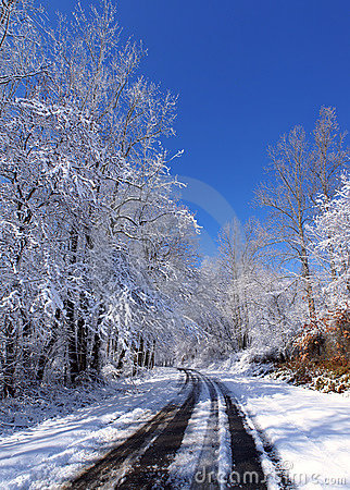 Free Snowy Country Road In The Sun Royalty Free Stock Photos - 8546988