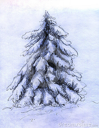 Snowy fir sketch