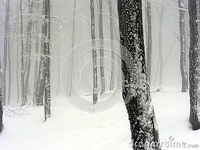 Snowy foggy landscape