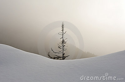 Snowy forest in fog