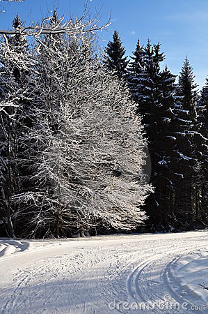 Snowy forest and road