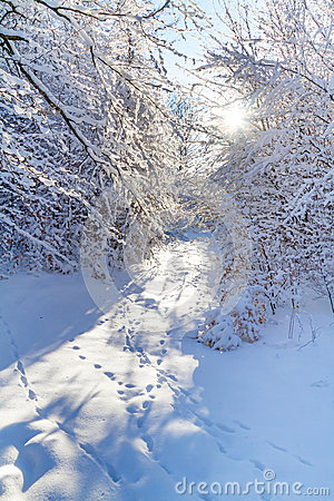 Snowy forest in the winter time