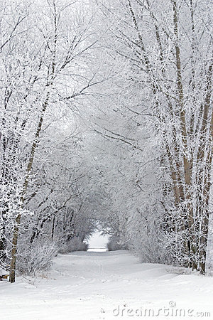 Snowy frost covered tree filled lane in country