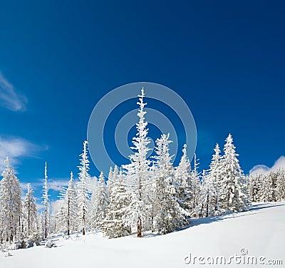 Free Snowy Landscape Stock Image - 16730051