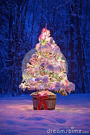 Outside Christmas Tree Lights
