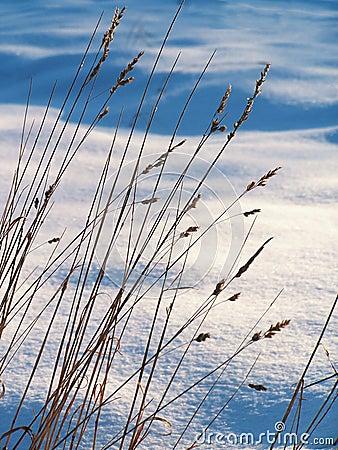 Free Snowy Meadow. Royalty Free Stock Photos - 405198