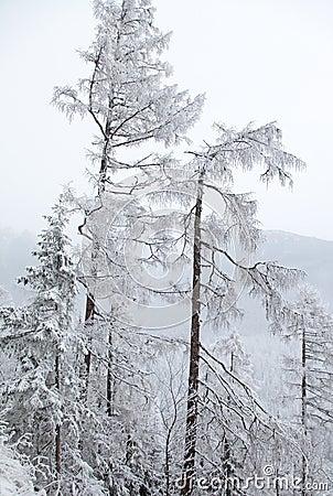 Free Snowy Nature In High Tatras, Slovakia Stock Image - 37262271