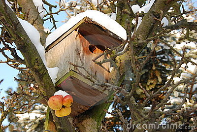 Snowy nest box