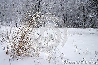In snowy park