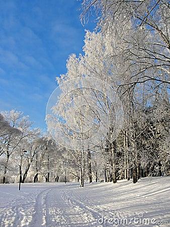Snowy park frozen trees background