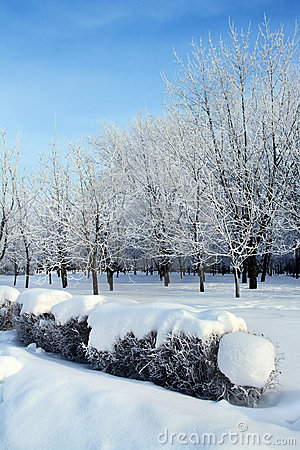Snowy park in winter