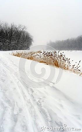 Free Snowy Path In Winter Landscape Stock Photo - 3968080