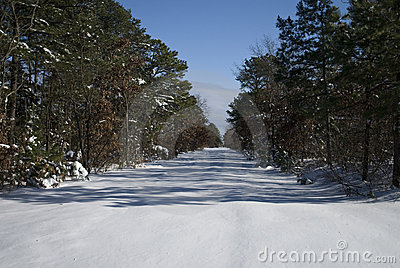 Snowy path and trees