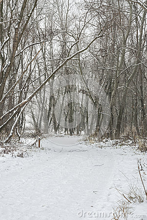 Snowy Pathway Through Forest.