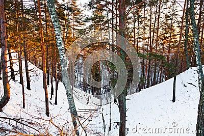 Snowy ravine in winter forest