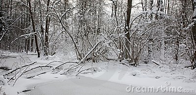 Snowy riparian forest over partly frozen river