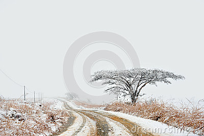 Snowy road in countryside