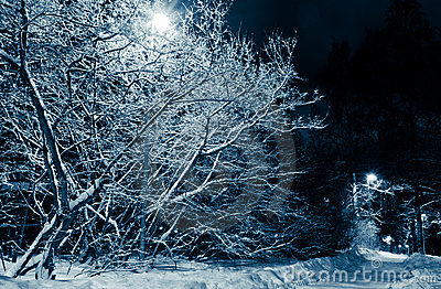 Snowy road and trees at night