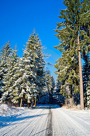 Snowy Road through Winter Forest