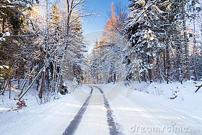Snowy road in winter forest