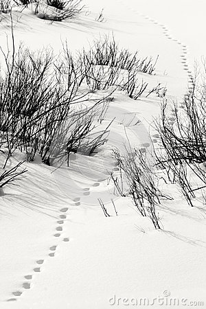 Snowy Track In Grand Teton National Park Royalty Free Stock Photography - Image: 29408507