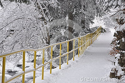 Snowy trail in the park
