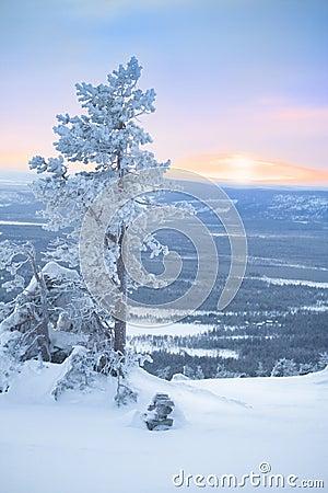 Free Snowy Tree At Dawn / Winter Morning Stock Photos - 11633433