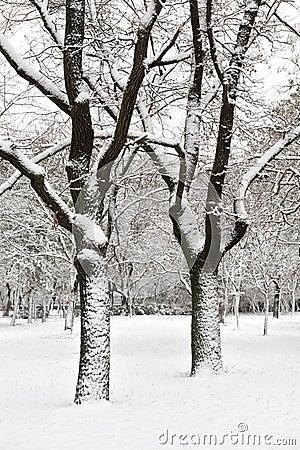 Snowy tree in park