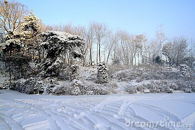 Snowy trees in countryside
